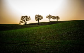 Picture field, trees, the evening