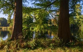 Picture greens, forest, summer, grass, the sun, trees, branches, river, Netherlands, De Haar Castle Park