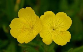 Picture Macro, Bokeh, Bokeh, Macro, Yellow flowers, Yellow flowers