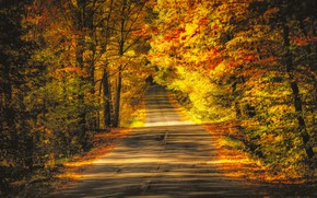 Wallpaper road, trees, autumn