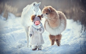 Picture Nature, Winter, Animal, Baby