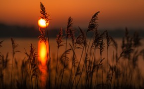Picture landscape, sunset, nature, the reeds