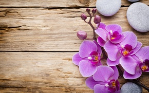 Wallpaper stones, wood, Orchid, orchid, flowers