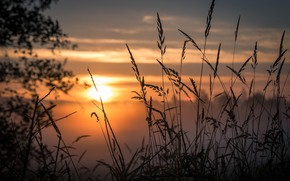Picture Sunset, The evening, Grass