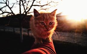 Picture autumn, cat, find, kitty, red, homeless, hellcat, neojidannaya