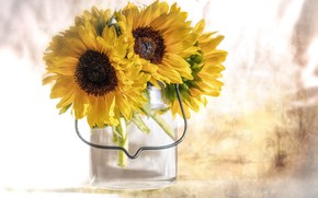Picture flowers, sunflower, petals, flowering, flowers, petals, sunflower, bloom
