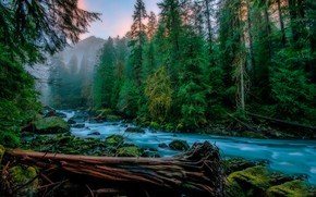 Wallpaper morning, fog, trees, Skykomish, moss, Skykomish, greens, forest, stream, stones, USA