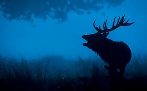 Wallpaper nature, silhouette, night, horns, deer