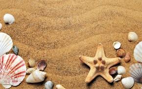 Picture sand, sea, Nature, shell, starfish, Sea