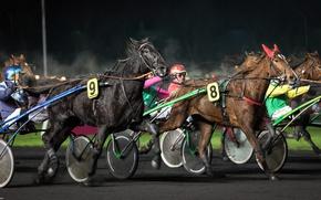 Picture race, sport, horses