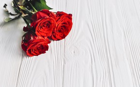 Picture flowers, background, bouquet, buds, red roses