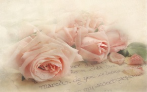 Wallpaper letter, style, tenderness, roses, texture, petals, buds