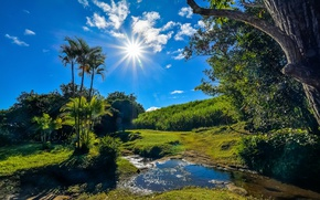 Wallpaper greens, summer, grass, the sun, clouds, trees, stream, palm trees, France, the rays of the ...