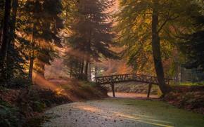 Wallpaper autumn, forest, the sun, rays, light, branches, bridge, fog, Park, trunks, vegetation, foliage, morning, ate, ...