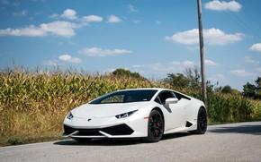 Picture Lamborghini, White, Huracan, Cornfield