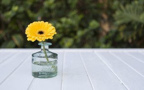 Picture flower, yellow, vase, yellow, gerbera