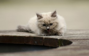 Picture kitty, background, cute, meows