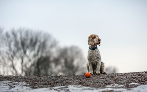 Picture each, the ball, dog