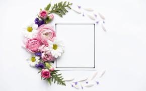 Picture flowers, roses, petals, Rose, flowers, decor, Leaves, frame, Ranunculus