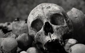 Picture background, skull, bones
