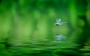 Wallpaper my planet, nature, tropics, travel, flight, blur, dragonfly, wallpaper., bokeh, water surface reflection, dragonfly, province, ...