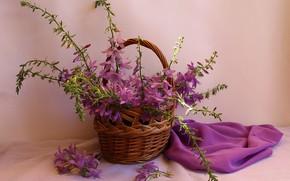 Picture summer, basket, still life, bells, wildflowers