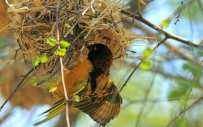 Picture bird, Wallpaper, socket