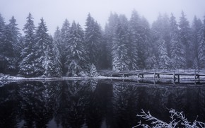 Picture winter, forest, snow, reflection, trees, bridge, fog, lake, ate