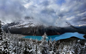 Picture Banff National Park, Canada, Peyto Lake
