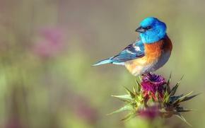 Picture flower, background, bird