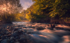 Picture the sun, trees, river, stones