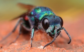 Picture eyes, macro, background, OSA, portrait, muzzle, beauty, insect, green, antennae, blurred, brilliant, bestanca