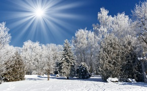 Wallpaper winter, trees, the sun, tree, winter landscape, snow