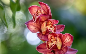 Picture tropics, exotic, Orchid