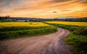 Wallpaper sunset, field, the sky, road