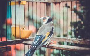 Picture summer, birds, nature, summer, nature, birds, goldfinch