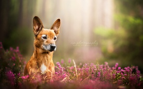 Picture nature, look, dog