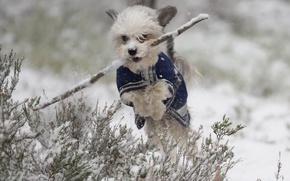 Picture winter, snow, jump, dog, walk, stick, doggie