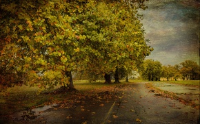 Picture road, autumn, tree, texture