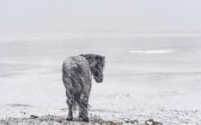 Picture snow, nature, horse