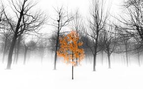 Wallpaper trees, fog, Park