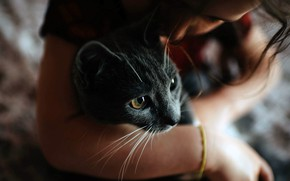 Picture girl, photo, cat, mood, hug, bokeh, feeling, Friendship, blurred, fur, portrait, kissing, close up, whiskers, …
