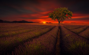 Picture field, the sky, tree, beauty