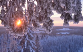 Wallpaper branches, the sun, Hannu Koskela, pine, trees, nature, winter, snow