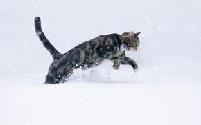 Picture cat, snow, wool, cat