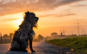 Picture road, sunset, dog