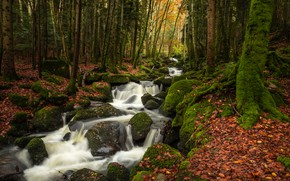 Picture autumn, forest, leaves, trees, stream, stones, France, moss, river, cascade, France, Auvergne, Auvergne