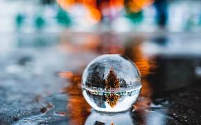 Wallpaper tree, ball, reflection, new year, macro, puddle, bokeh