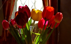 Picture Spring, Tulips, Room, Window, Spring, Colors, Tulips