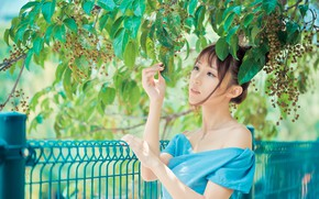 Picture branches, the fence, hands, Asian